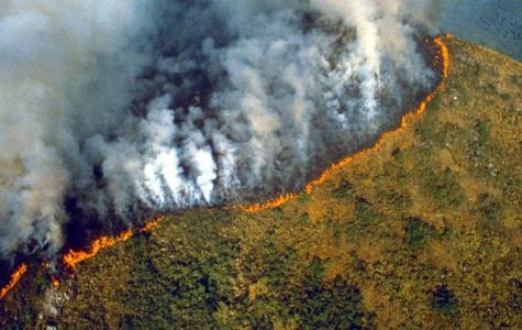 Amazon Rainforest Fire: The Story Behind It